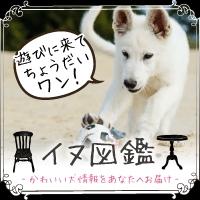 イヌ図鑑(324円コース)